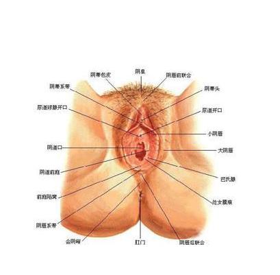 陰部 疥癬